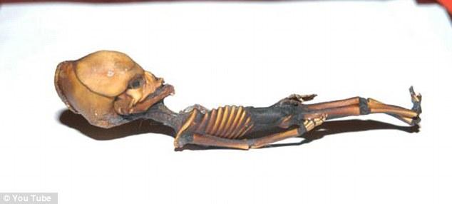 6 inch human skeleton alien found
