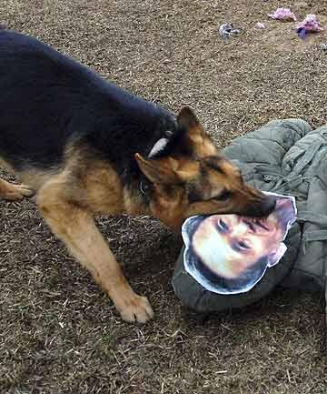 north korea bizarre dog attack