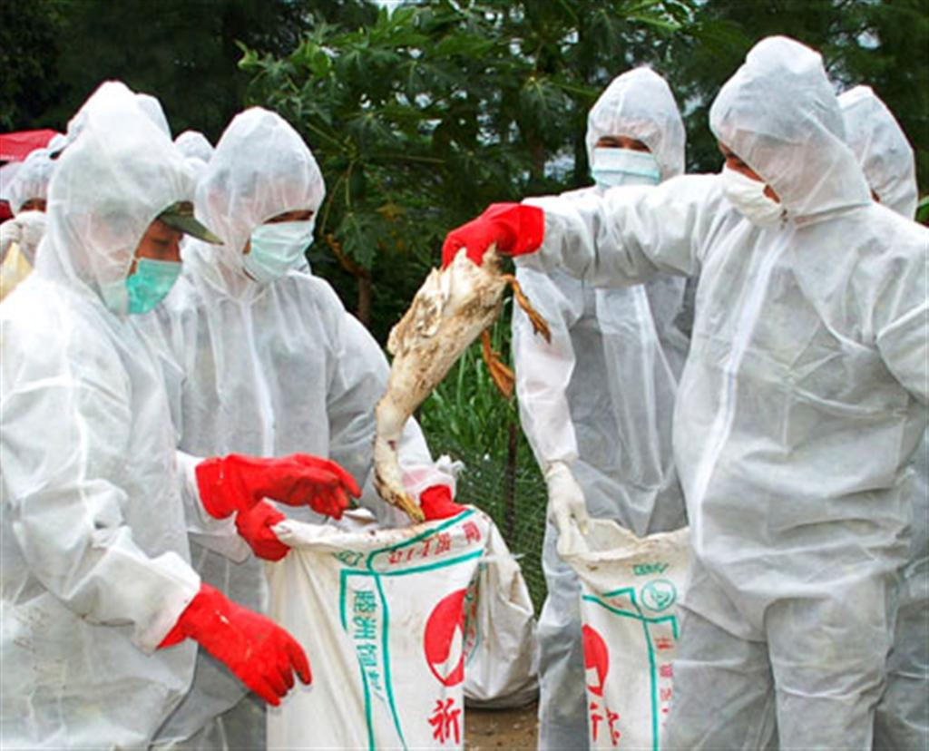 Authorities on high alert after detection of bird flu in Kaski and Sunsari