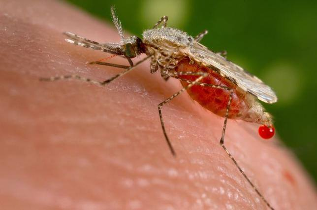 Malaria claims over 1,900 lives in South Sudan in 6 months