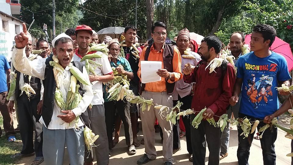 बाँदरविरुद्ध किसानको र्यालीः परिवार नियोजन गर्न माग