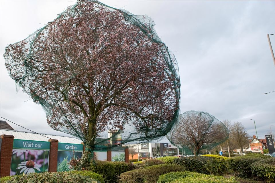 nets on britains trees 22867
