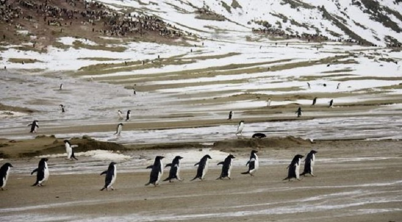 अन्टार्टिका महाद्वीपको तापक्रममा नयाँ रेकर्ड